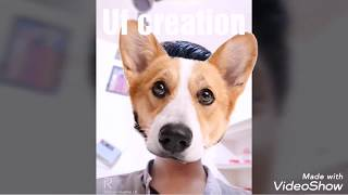 Funny face dogs  talk
