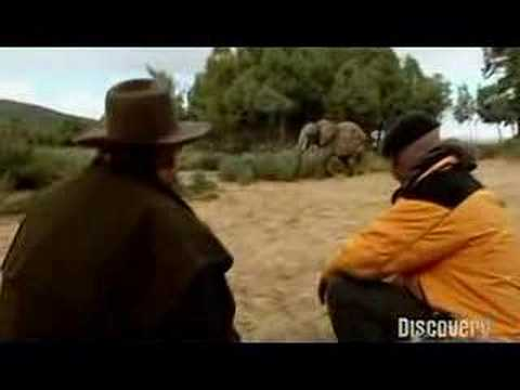 Mythbusters: Are elephants afraid of mice? Video