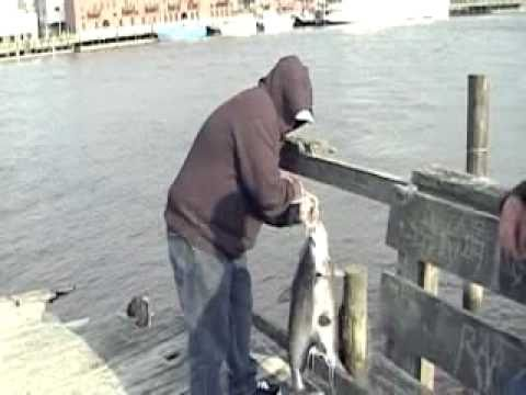 2 BIG CATFISH CAUGHT at CAPE FEAR RIVER N.C