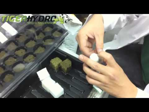 How To Germinate Flower And Fruit Seeds Hydroponically By Professor Poe