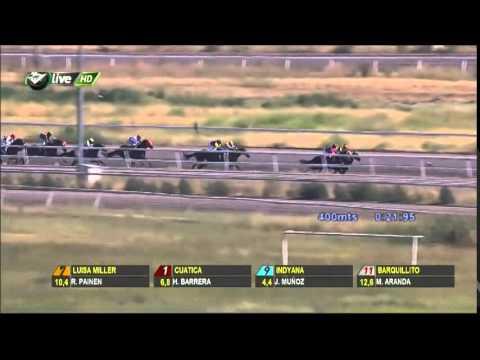Vidéo de la course PMU PREMIO VAMOS MUCHACHO H.