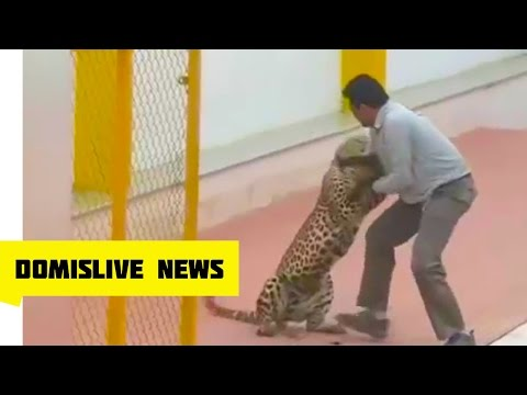 Leopard Attacks Indian School - 3 Mauled as Leopard Runs Wild