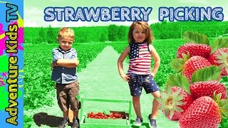 Adventure Kids TV Go Strawberry Picking for Kids at Harvold Berry Farm in Carnation Washington