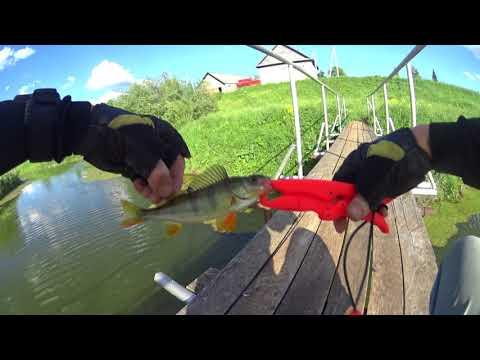 ловля окуня в пруду летом