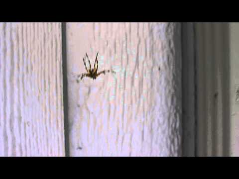 Spider Freaks Out At Man's Singing Voice video