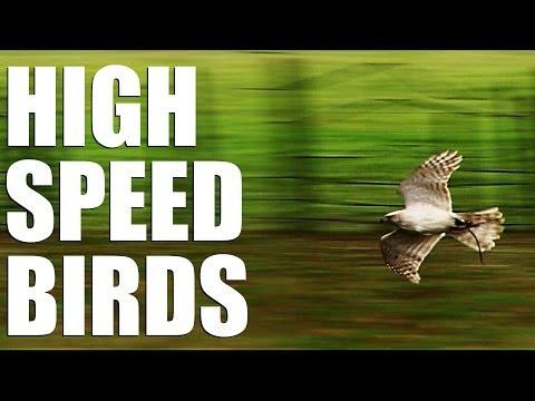 Fieldsports Britain - High speed birds (episode 209)