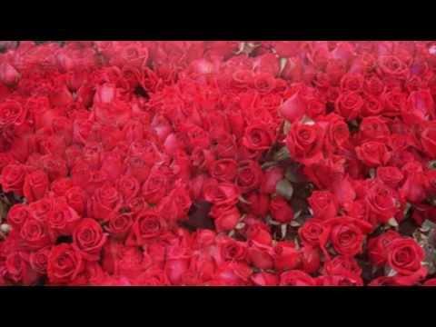 Миллион роз стих
