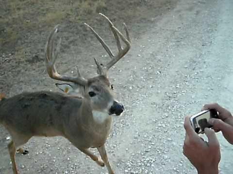 My Pet Deer....Charlie