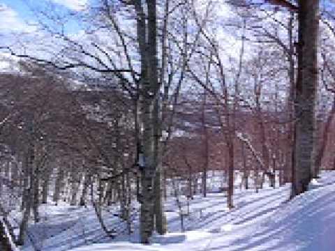 Kuromatsunai fagus snow tour