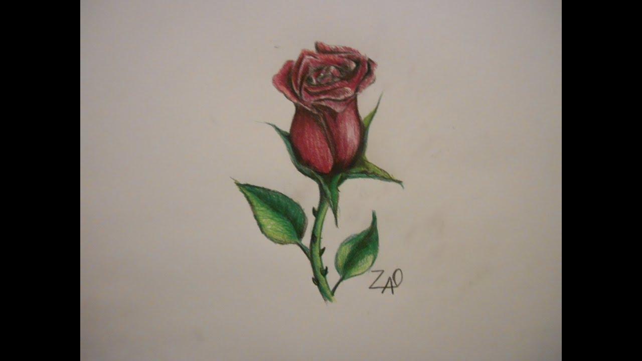 Como dibujar una rosa tutorial youtube - Como secar una rosa ...