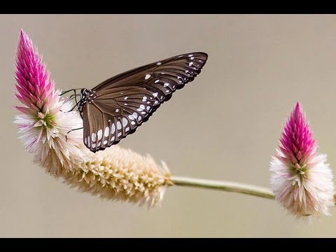 Oh Butterfly Tamil Karaoke For Male Singers video
