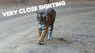 Ranthambore Tiger Sighting | Female Tiger