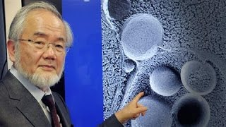 Video: 'Self-Eating Cell' research linked to Fasting wins Nobel Prize 2016 - Yoshinori Ohsumi
