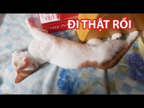 Tội Cho Mèo Sun Đã Đi Sau Một Lần Ngủ Cuối