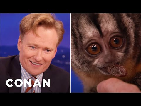 Conan Tangles With An Owl Monkey video