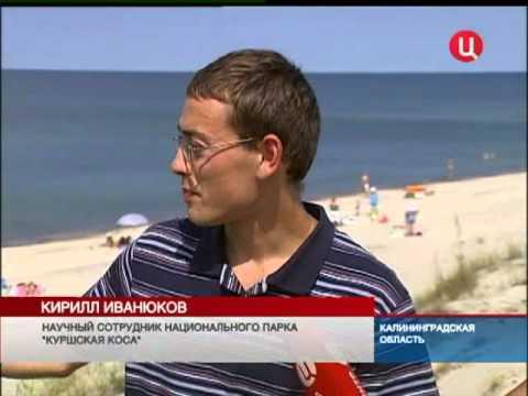 На пляже вместе с людьми отдыхает тюлень