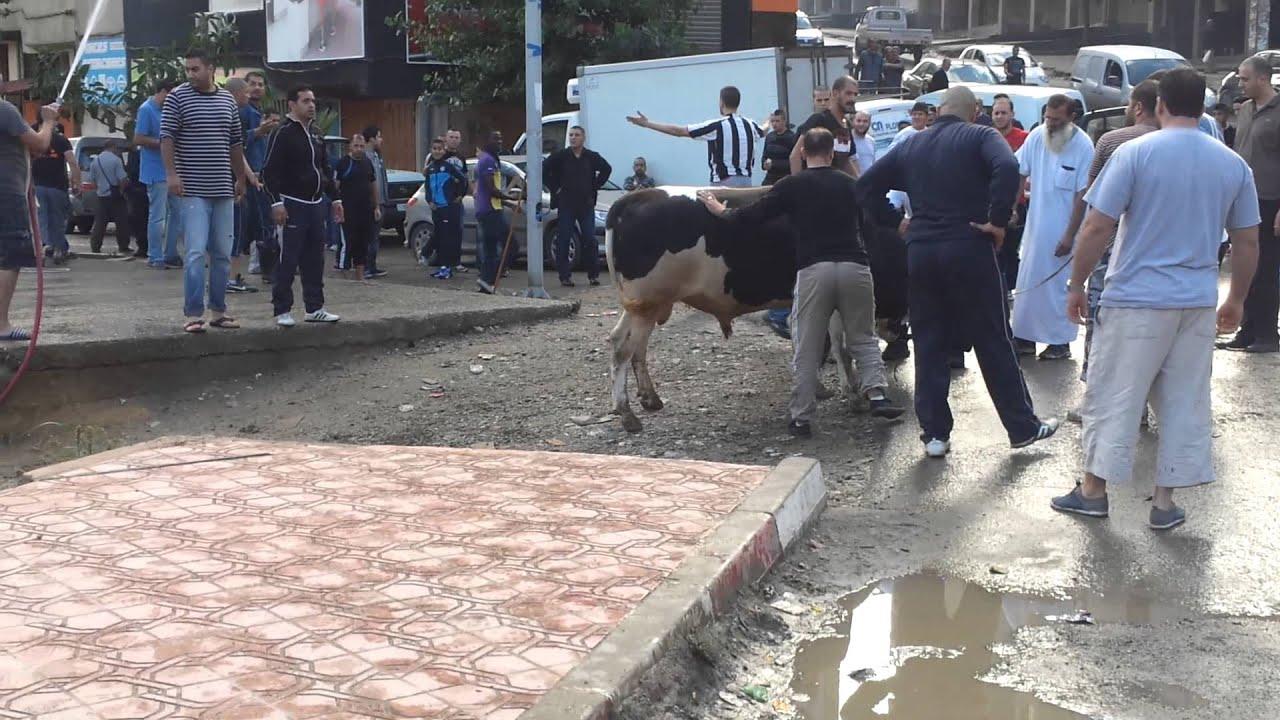 el3id lekbira f les 600 (tizi ouzou nouvelle ville ) :D - YouTube