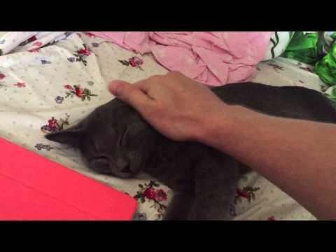 Спящий котэ