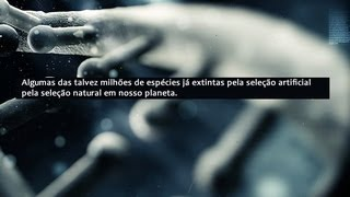Animais extintos pela ação do homem