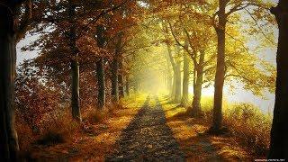 Осень Лес + Велосипед  Урал Выходные 6