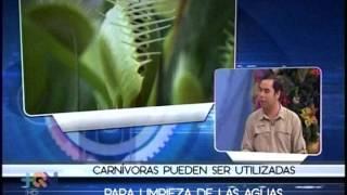 Las plantas carnívoras ofrecen más de un beneficio a la naturaleza