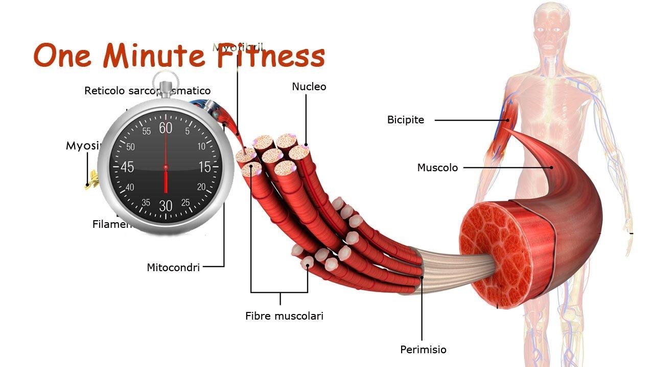 Fibre muscolari: caratteristiche e tipologie