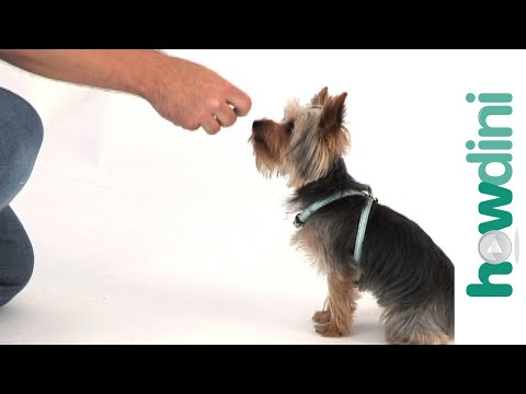 Dog Training Tips: How To Train A Puppy To Sit video