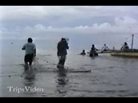 Philippines Cauayan Net Fishing Along The Shore