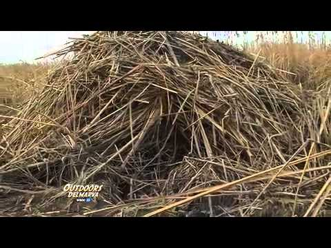 Outdoors Delmarva: Muskrat Trapping