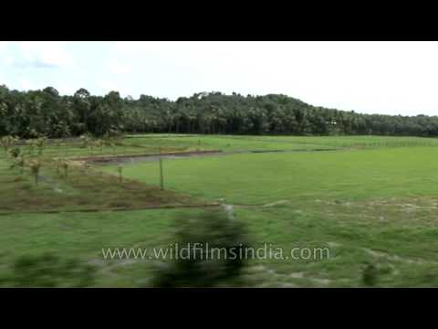 Passing by the God's own country: Kerala