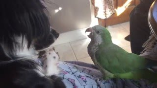Parrot and rescue dog play
