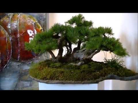 Bonsai meets Art