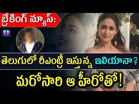 Ileana Re Entry In Tollywood With Star Hero Once Again | Celebrity Updates | TFC Films And Film News
