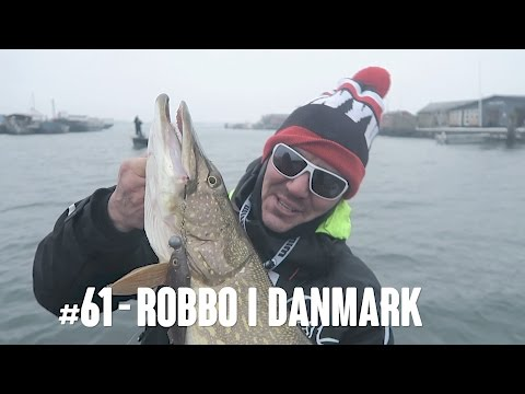 Robbo VLOG #61 - Storgädda i Danmark