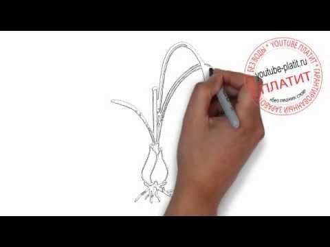 Видео как нарисовать лук карандашом поэтапно