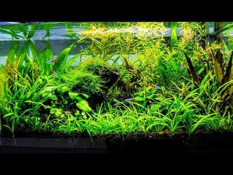 Фото дизайна аквариума с гигрофилами