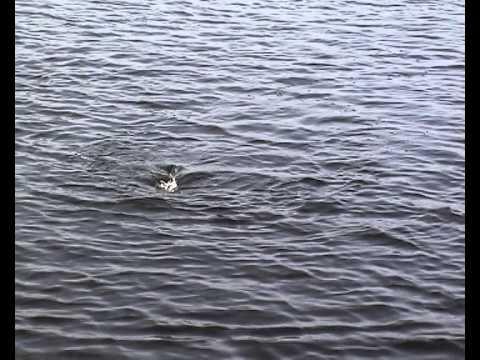 Сахалин, озеро Аинское, спиннинг.