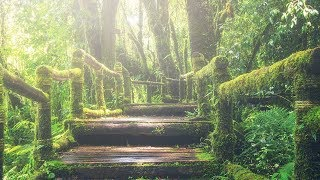 "Peaceful Relaxing Instrumental Music, Meditation Music ""Pathway Through the Forest"" by Tim Janis"