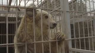 FOUR PAWS PREVENTED FROM SAVING LULA AND SIMBA FROM MOSUL ZOO!