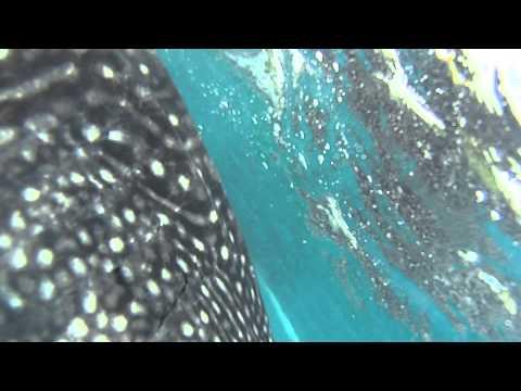 세부 오슬롭 고래상어 스노쿨링 체험