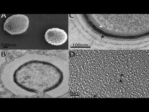 Frankenvirus emerges from Siberia's frozen wasteland