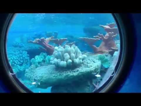 Finding Nemo Submarine Voyage   Full Ride in 4K UHD