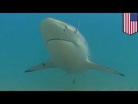Десятки тысяч акул плавают у побережья Флориды