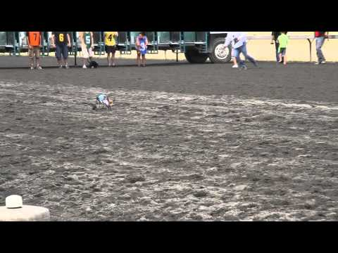 Anderson Pooper racing in the Star 101.5 Weinerdog Races at Emerald Downs