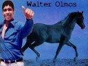 Walter Olmos
