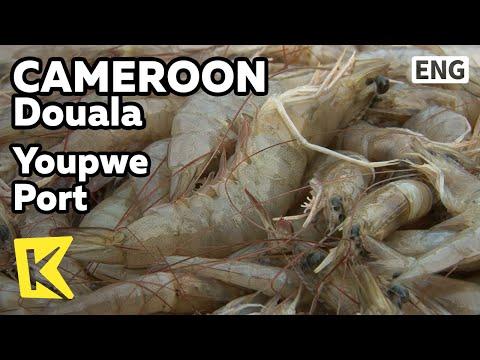 【K】Cameroon Travel-Douala[카메룬 여행-두알라]유뻬 항구에서 찾아낸 아프리카 새우/Youpwe Port/Shrimp/Fisherman/Sea/Fish