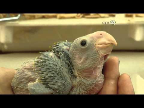 Desde el Zoológico: Conoce los bebes del zoológico GDL