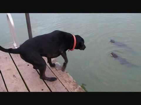 Catfishing doggie style http://facebook.com/everythingdogs