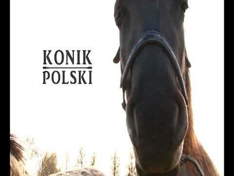 Konik Polski I Koń Słowacki W Jeździectwie I Turystyce