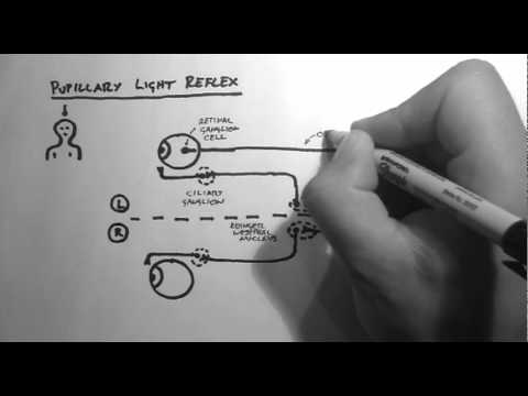 Reflexes 2 - Pupillary Light Reflex
